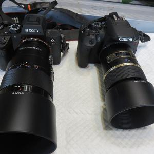 高いカメラ?それとも安いカメラ?どっちで撮ったでしょうか~(* ̄∇ ̄)ノ