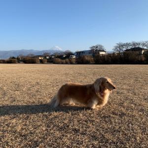 富士山とコラボ??