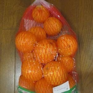 コストコ、真夏にオススメフルーツはオトク価格のネーブルオレンジが美味しい!
