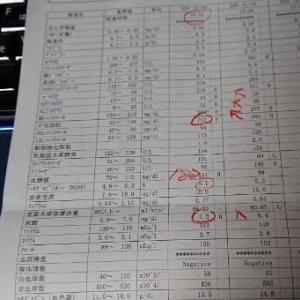 12月の血液検査。