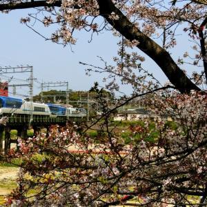 咲誇る桜きんてつ2018 in国分下り