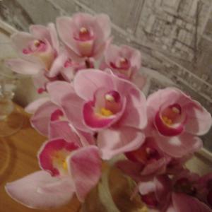 今週のお花。すっごく長持ちする種類です