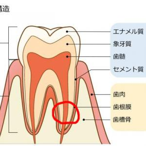 歯が骨折?