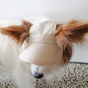 実用新案レベルの犬の帽子