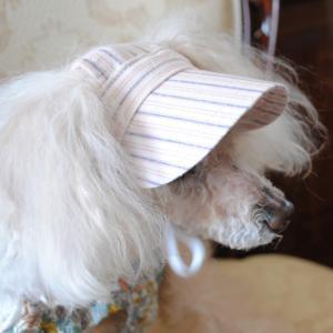 犬の帽子 リクエスト受付再開