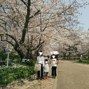桜  &  モヤモヤイライラ