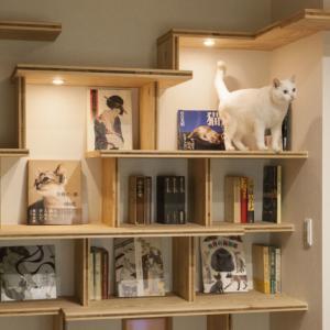 猫と暮らす趣味室のある家を動画でご紹介します。住まいのインテリアコーディネーションコンテスト受賞作品