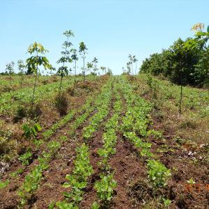 それでもカンボジアの農業は面白い 2