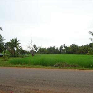 カンボジアの農地