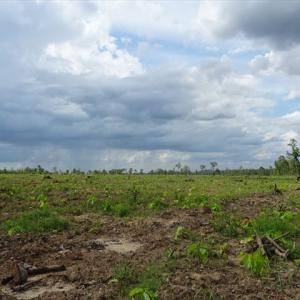 カンボジアの未来を考える・・・畑で
