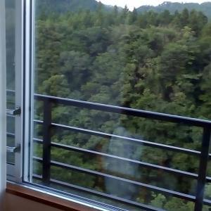 本日、カムイが窓から脱走!
