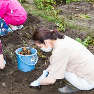 ジャガイモ掘り - 夏の恋ヨ