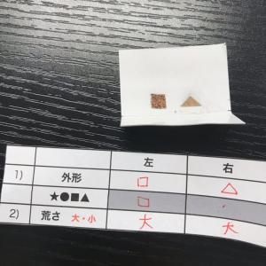 さかもと塾ベーシック歯周病学コース第2期を受講!