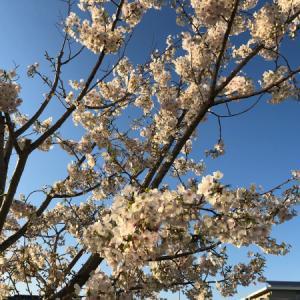 春のマドラス