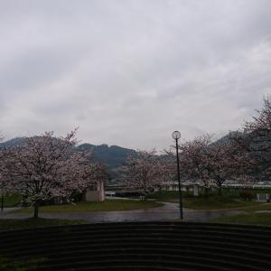 20@03月30日【 涙  桜 】