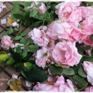 'ビエドゥ'の花を片付け