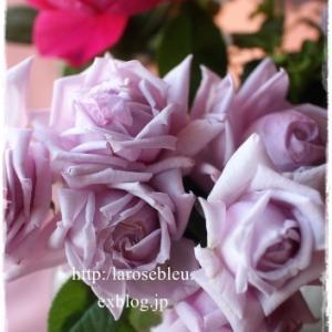 薔薇とビオラと