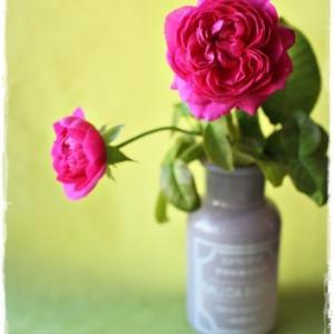 'アレゴリー'の三番花