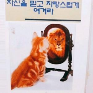 韓国人の好きな言葉