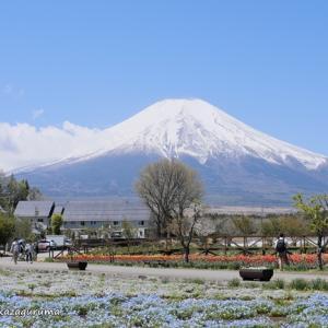 花越しの富士山を拝める公園