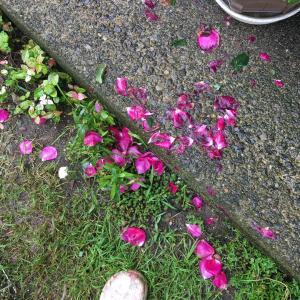 お庭の花も楽しんで