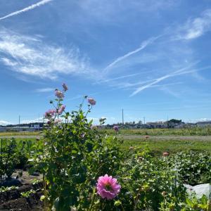 日曜日の市民農園