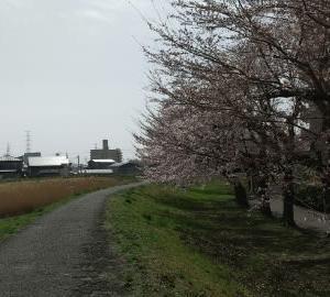 自粛とか桜とか