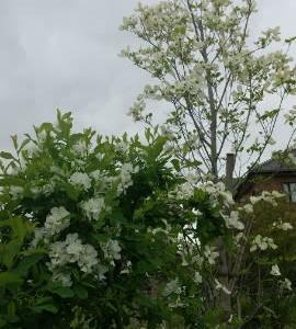 白い花のようにひっそりと