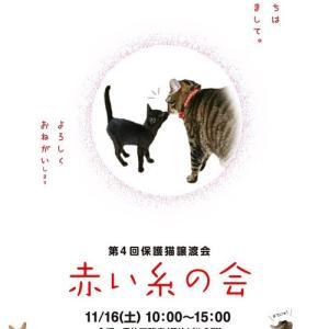 2日連続猫の譲渡会「赤い糸の会」&「ねこメルカート」