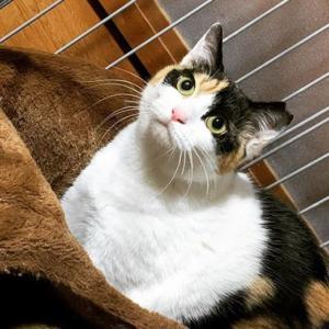 保護猫達の里親さん大募集です