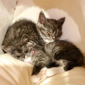 保護猫達の家族を募集しています