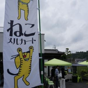 甲賀市で子猫の譲渡会『ねこメルカート!』
