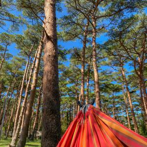 晩夏キャンプのつもりが初冬キャンプ in えびの高原キャンプ村!!その2。フォレストアドベンチャー