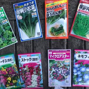 ほうれん草 小松菜の種まき