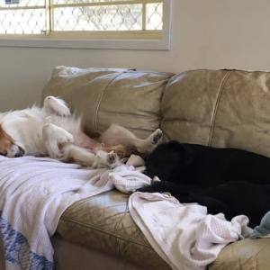 犬、疲れをみせる