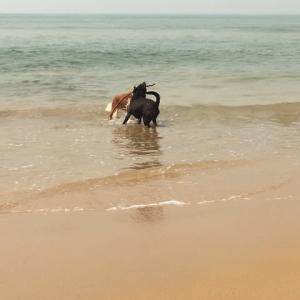 犬、久しぶりの海で戯れる