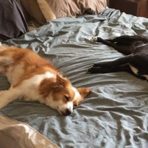 犬、飼い主に減量を求める