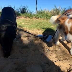 犬、不安と戦う