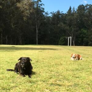 春を楽しむ犬