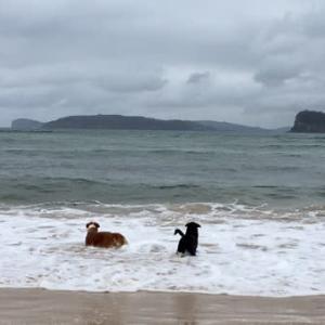 海、大好きだワン