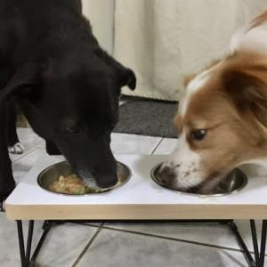 犬、手作りご飯を堪能す