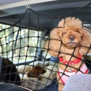 増税と駆け込み犬旅 その2