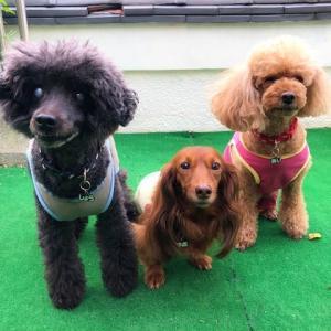 増税と駆け込み犬旅 その4(滋賀県・琵琶湖周遊)