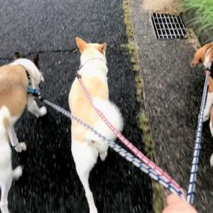梅雨明けしたら、したい事