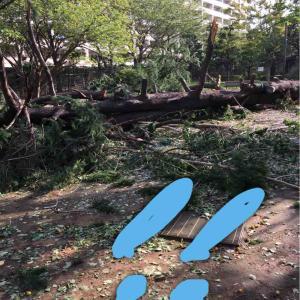 台風の被害、まだまだ残っていますね