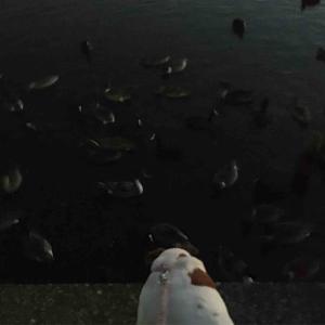 元日本一汚い沼公園には鳥さんがたくさんいます