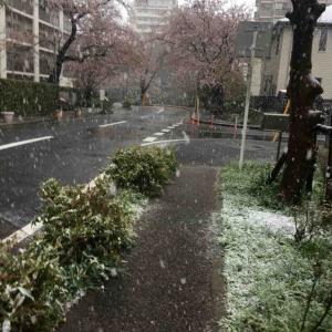 雪だね!ひゃっほほーーーい!ゆきんぽ!