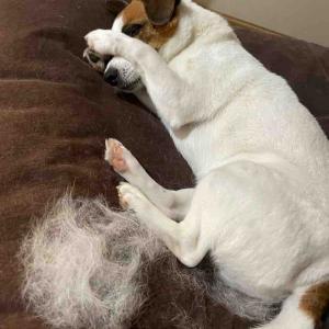 アボちん抜け毛がゴイスー。