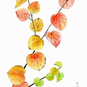 ハート型の葉っぱがかわいくて