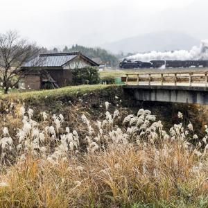 枯れ尾花(山口線)